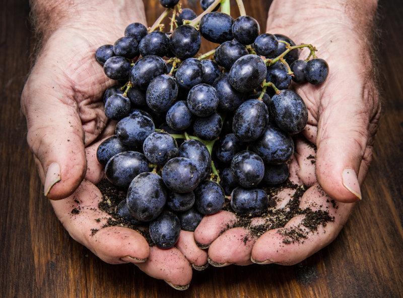 Vin sans sulfite